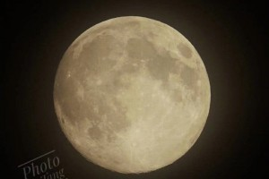 这个月亮又大又粉今晚你拍到了全年最大的超级月亮吗