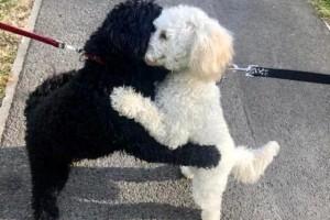 出门漫步狗狗忽然和其他狗抱在一同本来竟是分开的兄弟